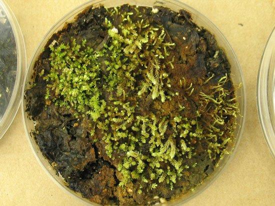 119.2 - Découverte de plantes « Hibernatus »