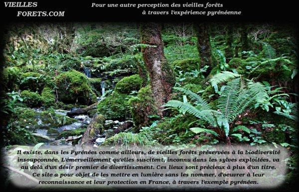 133.2 - Vieilles forêts.com  un site à voir  !