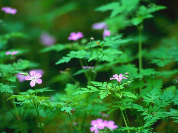136.2  - 森の木琴 - Musique en forêt...