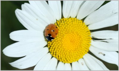 137.2 -Les Jardins de Noé, une charte en faveur de la biodiversité