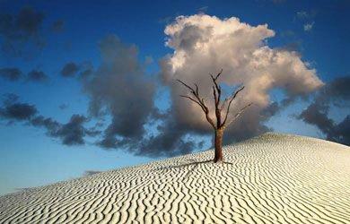 138.4 -Quand le jardin a la tête dans les nuages..... un peu de poésie ça ne peut pas  faire de mal !