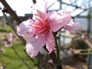 143.2  - Rappel des travaux au jardin, pour le mois de février ...