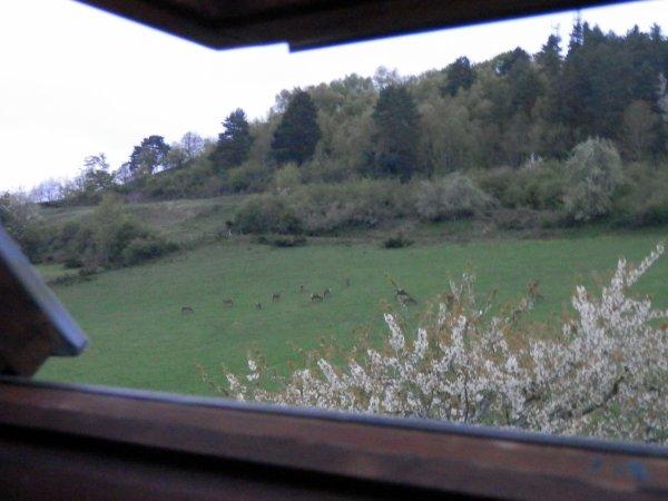 144 - Cerfs et jardinage ne font pas bon ménage  !