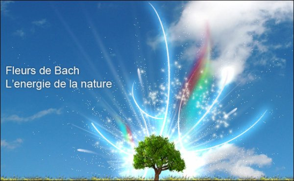 152.2 - Film : Voyage au c½ur des fleurs de Bach