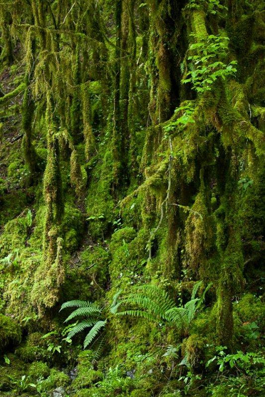 154.1 - La  petite Amazonie Pyrénéenne ....