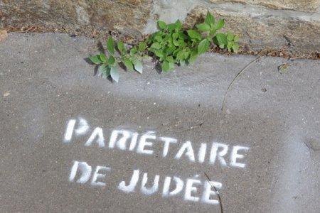 156.3 - A Nantes, une mystérieuse graffeuse nomme les plantes des rues