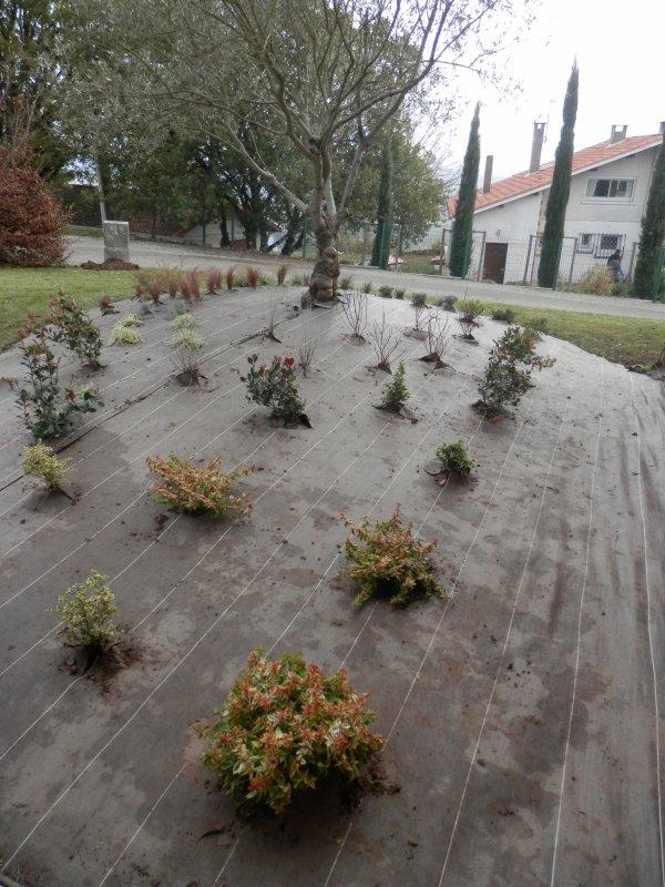 156.4 - Plantations d'arbustes variés  sur bâches tissées  Printemps 2014