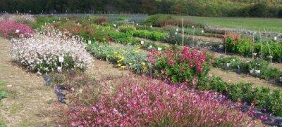 159.2 - OUTIL : Un CDROM dédié au fleurissement