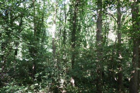 166.3 - La diversité des arbres et la résistance de la forêt à la sécheresse