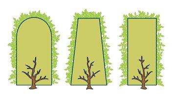 171.1 - Avec l'arrivée du froid , la saison de la taille des conifères va  pouvoir commencer ... Pour toute intervention ou commande d'autres travaux (nettoyage, plantations, ...) Merci de  prendre rendez-vous  à l'avance..!