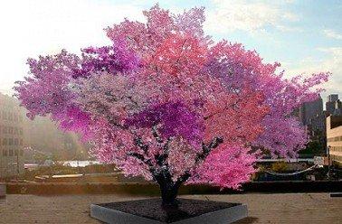 171.2 - L'arbre aux 40 variétés de fruits !