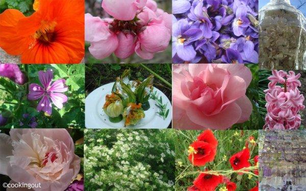 175.3 - A la recherche des plantes oubliées...