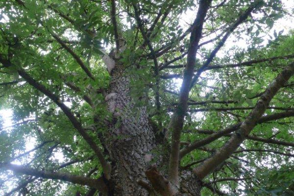 177.3 - J'ai un arbre dans ma vie