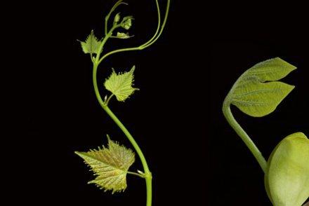 182 - « Les plantes bougent, sentent et réagissent mais nous ne sommes pas capables de le voir »