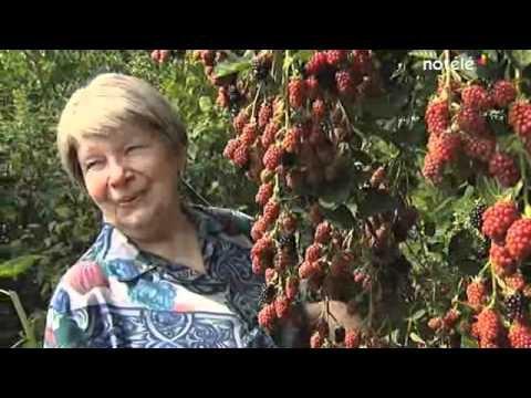 """184.1 - Permaculture forêt comestible: """"Jardin des Fraternités Ouvrières"""" en Belgique"""