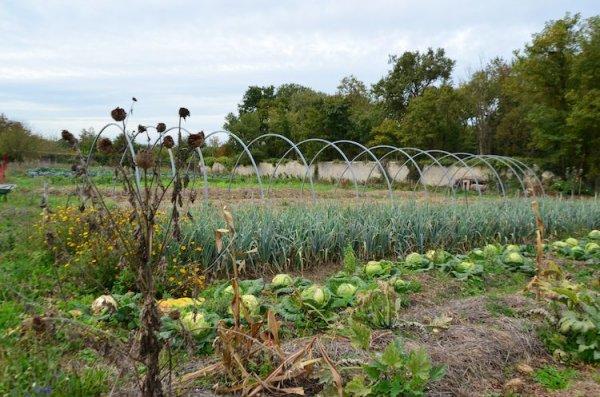 187.2 - Fermes d'avenir :  La permaculture open fourche à la Bourdaisière