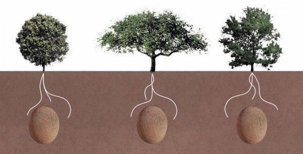 189.2 - Ils transforment les défunts en arbres avec une capsule funéraire