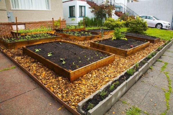190.4 - En 60 jours, il est passé de quelques graines à un potager bio hyper productif en permaculture