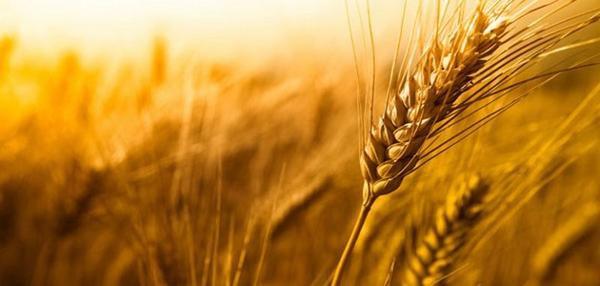 192.2 - Alimentaire : un enfant de 11 ans détruit Monsanto