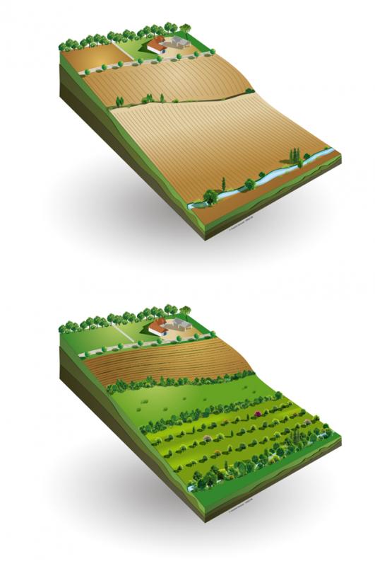 194.3 -  Agroforesterie : Les arbres à notre secours