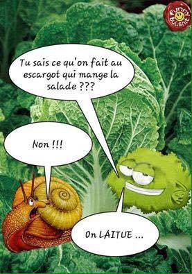 196.3 -Humour jardinée