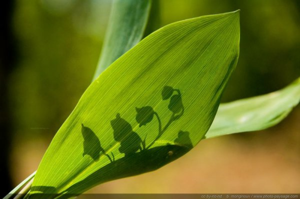 197.1 - Le printemps du jardinier ...