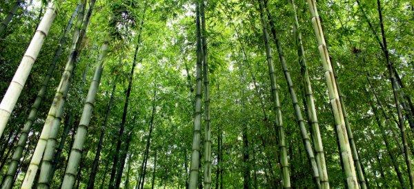 199 - La Chine construit un mur d'arbres pour lutter contre le réchauffement climatique