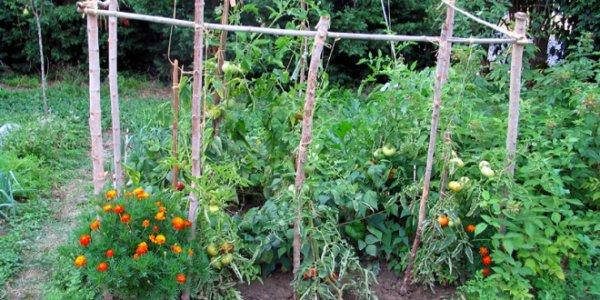 201.4 - Les bonnes associations de plantes au jardin potager