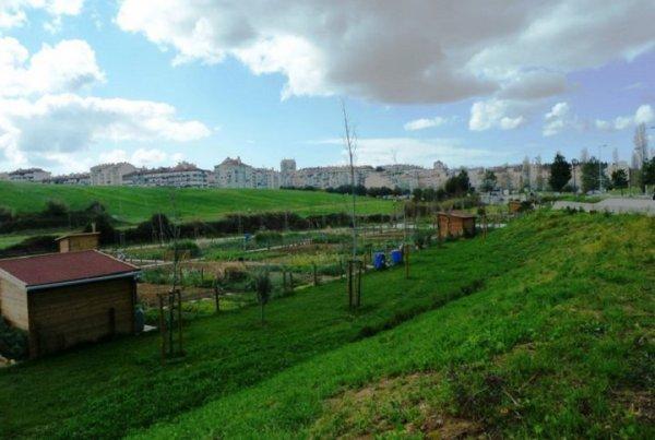 205.1 - A Lisbonne, les parcs deviennent des potagers urbains