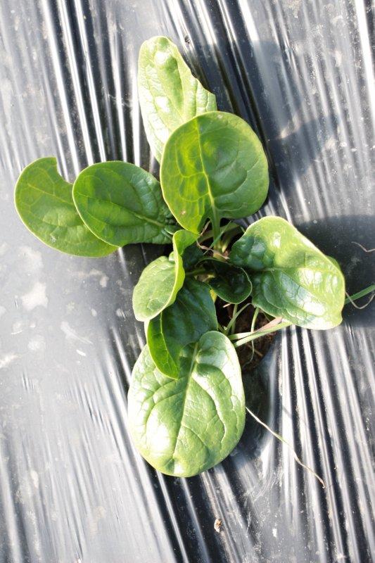 Monpotager.com : Faire pousser des légumes sur... le Web !
