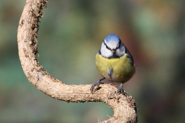 Le silence des oiseaux, le reportage choc sur la disparition des passereaux
