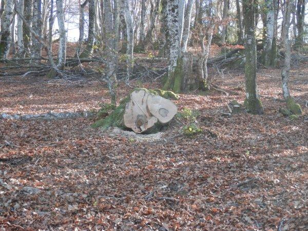 """Sortie """"des tranchées"""" Tarn & Garonaise un 11 novembre , une journée Pyrénéennes """"haut bois"""" :)   !"""