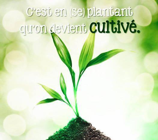 Apprendre la botanique... en 10 leçons