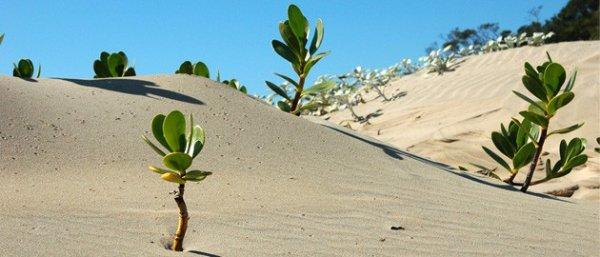 """Philippe Ouaki Di Giorno : l'homme qui faisait pousser les plantes... """"sans eau""""  ou presque  !"""