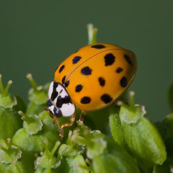 "Insectes : Distinguer les bons des ""méchants"""
