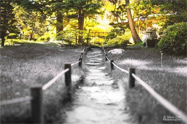 """""""Le bout du monde et le fond du jardin contiennent la même quantité de merveilles.""""   - Christian Bobin (Tout le monde est occupé)"""