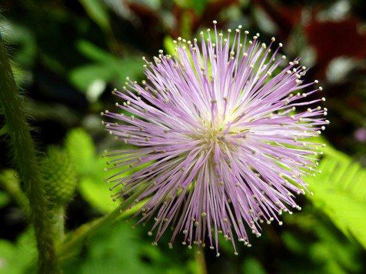 Les plantes sont-elles des animaux comme les autres?