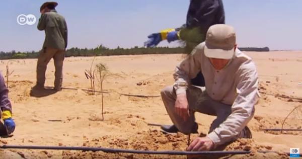 En plein désert égyptien, une forêt de 200 hectares. Merci les eaux usées !