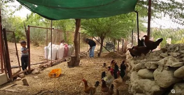 Geoff Lawton fait verdir le désert grâce à la permaculture- Le Bec hellouin  -