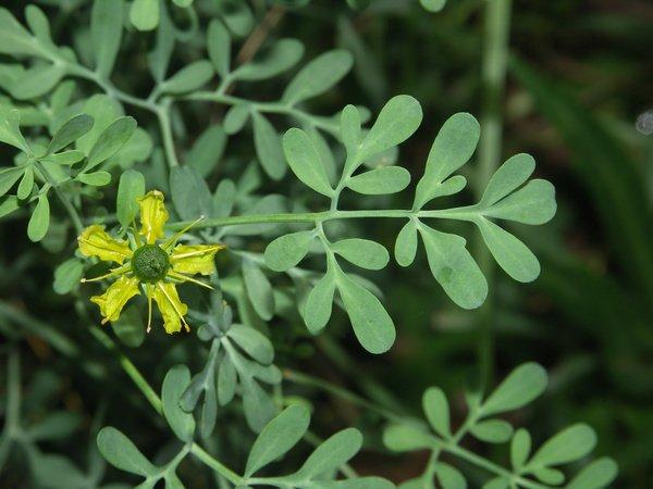 Des remèdes naturels pour votre jardin ... ou comment cultiver sans s'intoxiquer  !