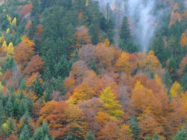 L'aube est moins claire, l'air moins chaud, le ciel moins pur ; Le soir brumeux ternit les astres de l'azur. Les longs jours sont passés ; les mois charmants finissent. Hélas ! voici déjà les arbres qui jaunissent ! Comme le temps s'en va d'un pas précipité ! Il semble que nos yeux, qu'éblouissait l'été, Ont à peine eu le temps de voir les feuilles vertes.  Pour qui vit comme moi les fenêtres ouvertes, L'automne est triste avec sa bise et son brouillard, Et l'été qui s'enfuit est un ami qui part. Adieu, dit cette voix qui dans notre âme pleure, Adieu, ciel bleu ! beau ciel qu'un souffle tiède effleure ! Voluptés du grand air, bruit d'ailes dans les bois, Promenades, ravins pleins de lointaines voix, Fleurs, bonheur innocent des âmes apaisées, Adieu, rayonnements ! aubes ! chansons ! rosées !  Puis tout bas on ajoute : ô jours bénis et doux ! Hélas ! vous reviendrez ! me retrouverez-vous ?  Victor HUGO