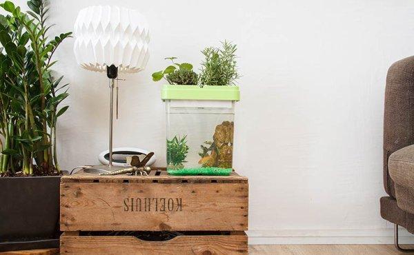 Il veut populariser les fermes urbaines en alliant poissons et plantes