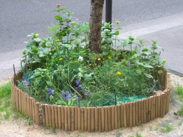 La ville de Paris distribue des permis de végétaliser l'espace publics -  A Rennes..qui  a la main verte ?