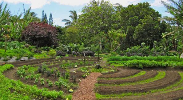 L'Inra en est désormais convaincu : oui, la permaculture est rentable !
