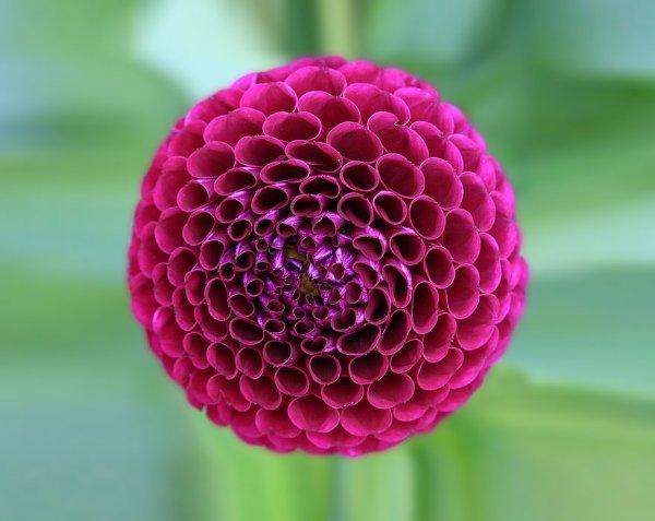 """""""Les Fractales"""", beautés fatales de la nature dans le règne végétal"""
