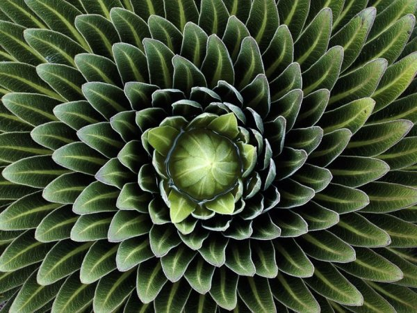Fractales végétales, merveilles de la natures...