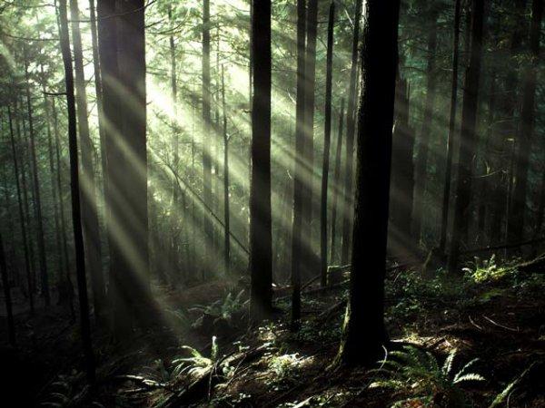 Découvrez comment les forêts ont le pouvoir de guérir les gens.