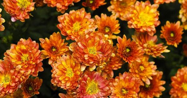 Selon la NASA, voici les plantes les plus efficaces pour purifier l'air de votre intérieur