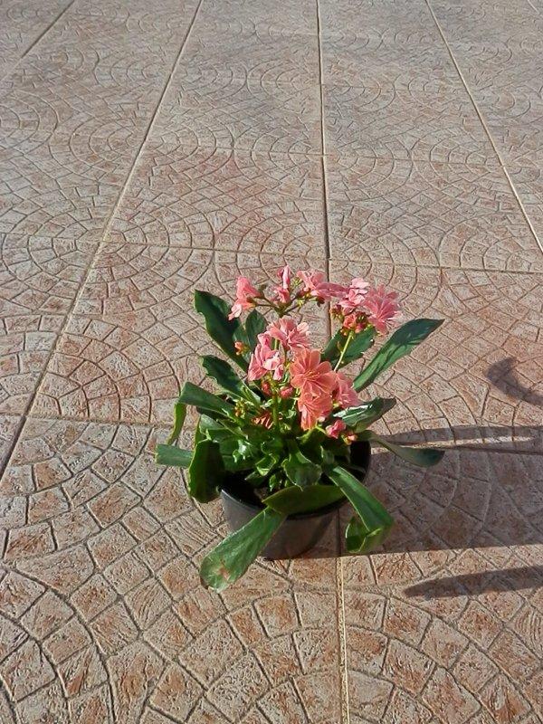 Une plante à fleurs découverte sur le marché de Moissac