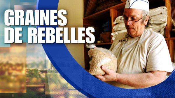 Graines de rebelles- un reportage du 13H15 de France 2
